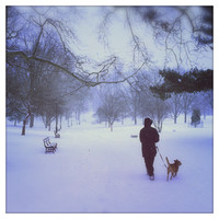 Man walking dog in Prospect Park, Brooklyn during a snowstorm.