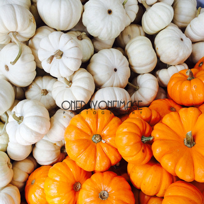 Stock photo available for licensing.  Mini pumpkins in white and orange.